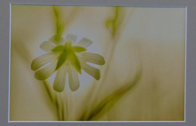 1e Prijs Flora / Here comes the sun / Hans Schot