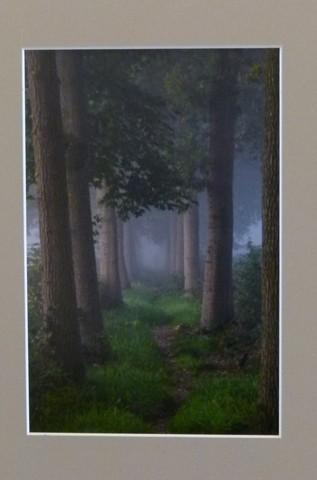 1e Prijs Landschappen / Bomenpad / Cor van Dongen