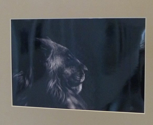 2e Prijs Fauna / Leeuw / Mike Wink